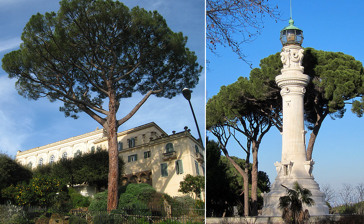 Pines at the Janiculum